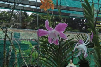 Orchid Nursery1
