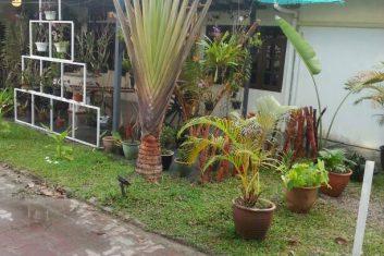 Orchid Nursery10