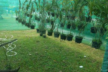 Orchid Nursery11