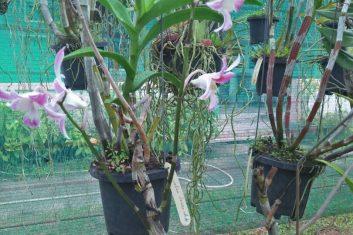 Orchid Nursery2