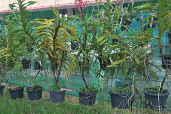 Orchid Nursery4
