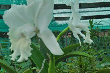 Orchid Nursery5